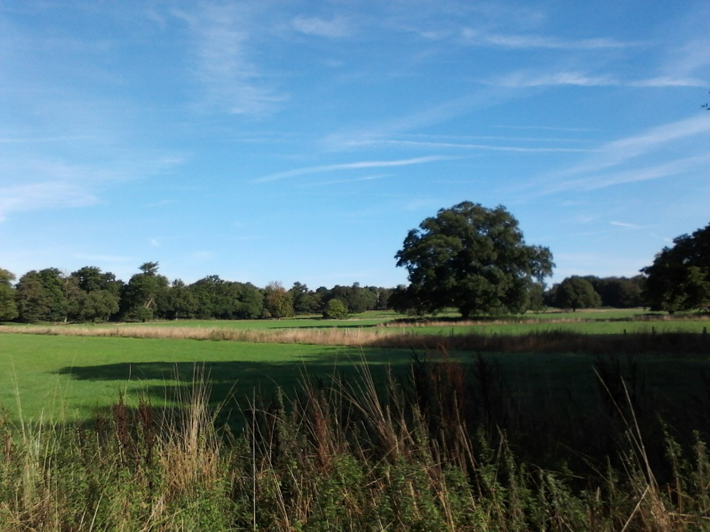 An English countryside view from our front yard